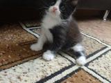 Котёнок в хорошие руки